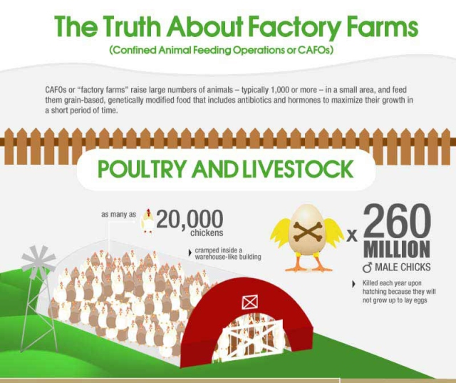 The Truth About Factory Farms – Dr Mercola | Inner Light Yoga